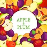 Cadre blanc rond sur le fond mûr de prune de pomme Illustration de carte de vecteur Pommes fraîches et juteuses Delicious de prun Image stock