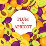 Cadre blanc rond sur le fond mûr de prune de pomme Illustration de carte de vecteur Pommes fraîches et juteuses Delicious de prun Photo stock