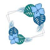 Cadre carré avec les fleurs vertes et bleues exotiques, feuilles illustration libre de droits