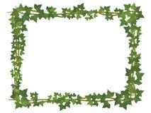 Cadre carré de lierre Photos stock