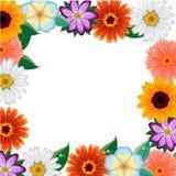 Cadre coloré différent de fleurs Photo stock