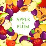 Cadre coloré rond composé de fruit de prune de pomme Delicious Illustration de carte de vecteur Cadre de prunes de pommes de cerc Photo stock