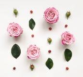 Cadre décoratif avec les roses et les feuilles lumineuses roses sur le fond blanc photo libre de droits