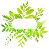 Cadre d'été avec les feuilles vert clair peintes Photographie stock libre de droits
