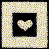 Cadre d'amour des fleurs de marguerites blanches Image libre de droits