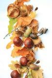 Cadre d'automne Image stock
