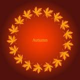 Cadre d'automne avec des feuilles d'érable Image stock