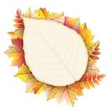 Cadre d'automne avec la feuille de chute ENV 10 Photos libres de droits