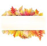 Cadre d'automne avec la feuille de chute ENV 10 Images libres de droits