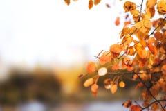 Cadre d'automne des feuilles de bouleau jaune et d'érable photographie stock libre de droits