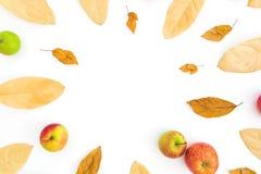 Cadre d'automne des feuilles et des pommes de chute sur le fond blanc Jour d'action de grâces Configuration plate, vue supérieure photographie stock libre de droits