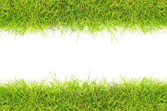 Cadre d'herbe Photo stock