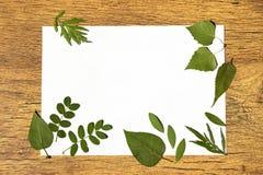 Cadre d'herbier avec l'endroit pour le texte Image libre de droits