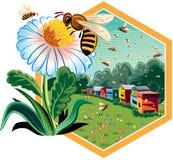 Cadre d'hexagone avec des abeilles de travailleur sur des fleurs illustration libre de droits