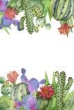 Cadre d'illustration avec le cactus Photos stock