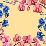 Cadre d'orchidées Image stock