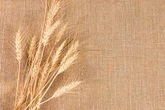 Cadre d'oreilles de blé sur le fond de toile de jute Photo libre de droits