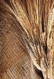 Cadre de blé Photos libres de droits