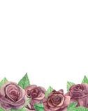 Cadre de bouquet de roses Photographie stock