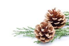 Cadre de cône de pin Images libres de droits