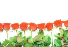 Cadre de carte postale avec les roses oranges Images libres de droits