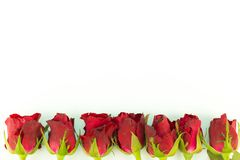 Cadre de carte de voeux des roses rouges sur un fond blanc avec l'espace de copie et l'utilisation comme concept de Saint Valenti Image libre de droits