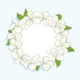 Cadre de cercle avec des fleurs de plumeria Image libre de droits