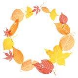 Cadre de cercle des feuilles d'automne Image libre de droits