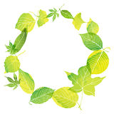Cadre de cercle des feuilles vertes Images libres de droits