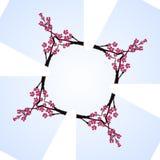 Cadre de croix de miroir de cerise de fleur de Sakura Photo stock