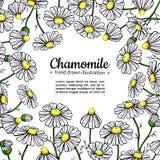 Cadre de dessin de vecteur de camomille Fleur sauvage et feuilles d'isolement de marguerite Illustration de fines herbes de style Photographie stock