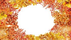 Cadre de feuillage d'automne, d'isolement sur le fond blanc Diverses feuilles colorées d'automne photographie stock