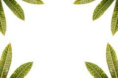 cadre 5 de feuilles Images stock