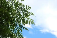 Cadre de feuilles Images stock