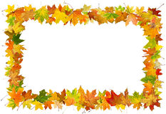 Cadre de feuilles d'automne Photographie stock