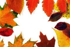 Cadre de feuilles d'automne Image stock