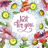 Cadre de fleur de camomille de Wildflower dans un style d'aquarelle Photos stock