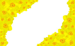 Cadre de fleur de narcisse Image libre de droits