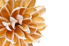 Cadre de fleur de papier photographie stock libre de droits