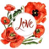 Cadre de fleur de pavot de Wildflower dans un style d'aquarelle d'isolement Image libre de droits
