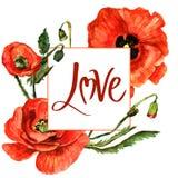 Cadre de fleur de pavot de Wildflower dans un style d'aquarelle d'isolement Photographie stock