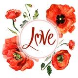 Cadre de fleur de pavot de Wildflower dans un style d'aquarelle d'isolement Photos libres de droits