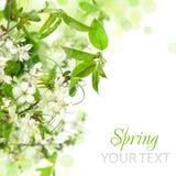 Cadre de fleur de source Photo libre de droits