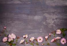 Cadre de fleur sur le fond chic minable gris Floraison de printemps Fleurs roses de source Vue supérieure avec l'espace de copie images stock