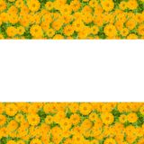 Cadre de fleur de Zinnias photo libre de droits