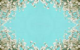 Cadre de fleurs blanches Photo libre de droits