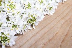 Cadre de fleurs blanches sur le fond en bois Image libre de droits