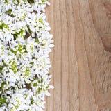 Cadre de fleurs blanches sur le fond en bois Photos stock