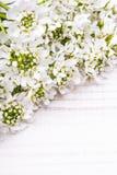 Cadre de fleurs blanches sur le fond en bois Photo stock