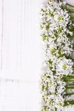 Cadre de fleurs blanches sur le fond en bois Photos libres de droits